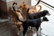 Начало на кампанията за бездомни кучета и котки