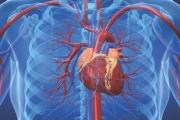 Смъртността от сърдечносъдови заболявания у нас два пъти по-висока от тази в ЕС