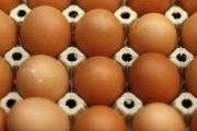 У нас няма информация за заразени с фипронил яйца