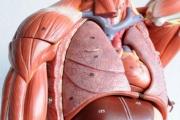 Нови две трансплантации извършиха в София