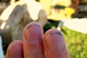 Мръсните нокти са опасни
