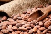 Какаовото масло заличава бръчките