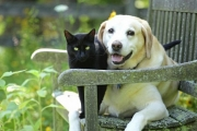 Наближава акцията по безплатно кастриране на бездомни кучета и котки в община Казанлък