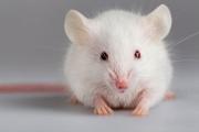 Екипът на д-р Владимир Кефалов вече кара слепи мишки да проглеждат