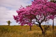 Мравченото дърво бори вируси