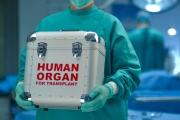 7-годишно дете стана донор за две бъбречни трансплантации