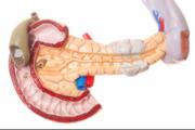 В България са възможни трансплантации на панкреас