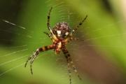 Марля, напоена в разтвор от сол и вода, премахва отрова, инжектирана от паяка