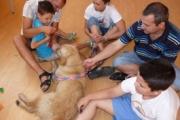 Търси се куче терапевт с водач за Стара Загора