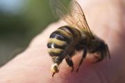 При ужилване или ухапване от насекомо намерете най-подходящата реакция