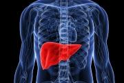 Черният дроб произвежда приблизително 500 мг жлъчни соли дневно