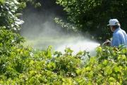 Започва пръскането срещу кърлежи на тревни площи и детски площадки в Стара Загора