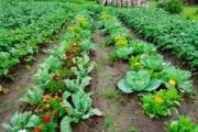 Градинарството допринася за позитивното настроение