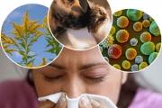 8 юли - Световен ден за борба с алергиите