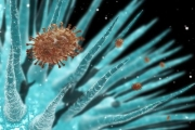 Няма данни за грипна епидемия у нас