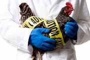 Междуведомствен национален щаб ще се бори с инфлуенцата по птиците