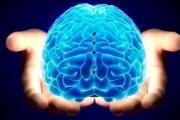При лошо детство - по-малък мозък