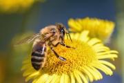 Подарете цветя на пчелите!