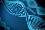Протеин помага в борбата срещу затлъстяването