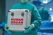 1091 българи чакат за трансплантация