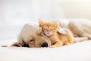 Мозъкът на котката е по-съвършен от мозъка на кучето